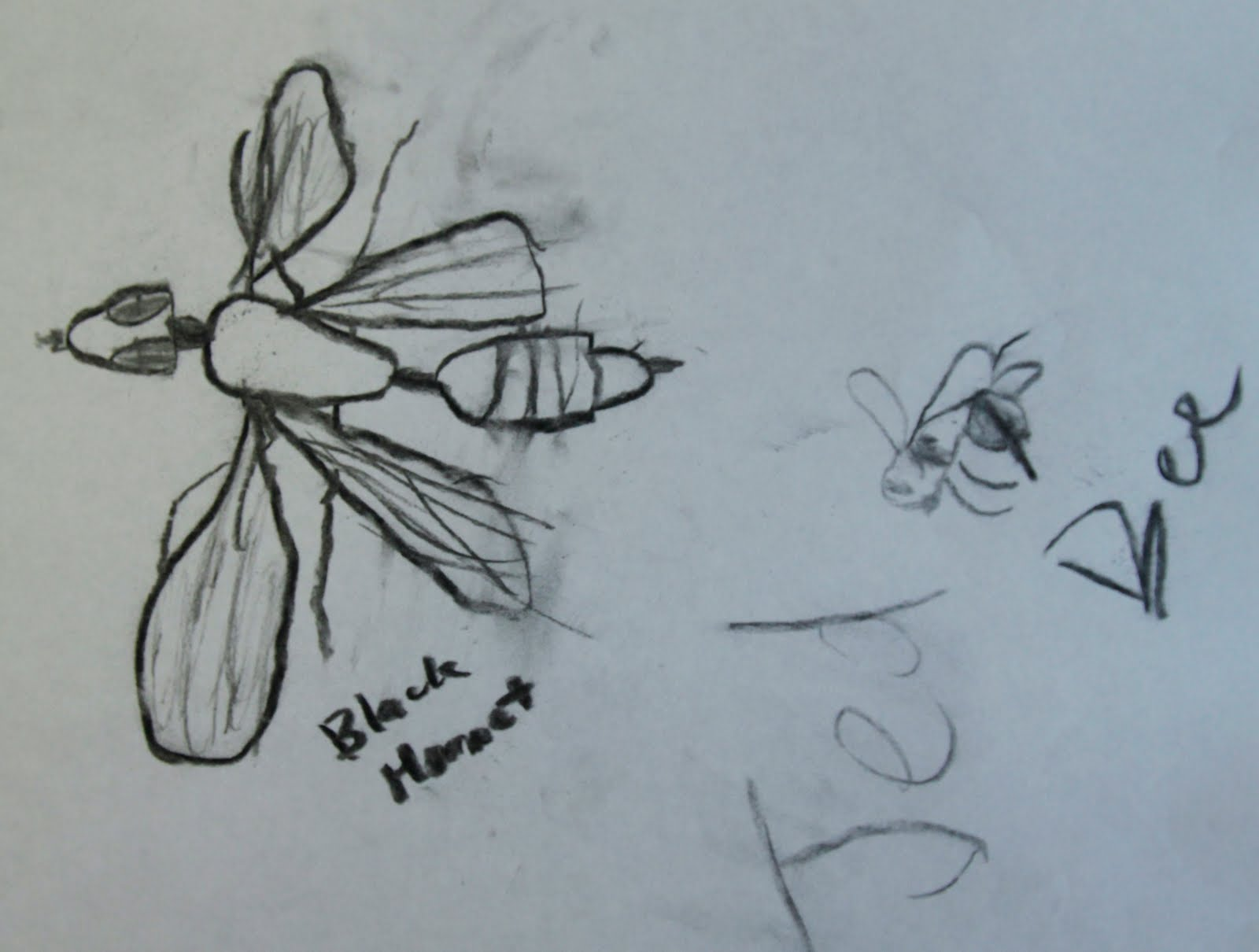insects2